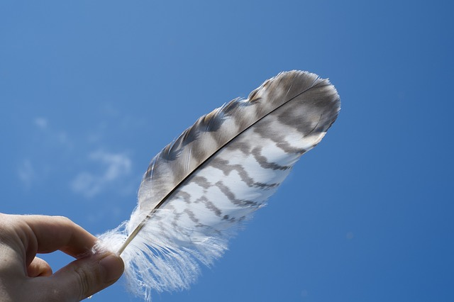 feather512640